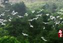 城市映像丨《南京》第一季(5):山峦叠翠