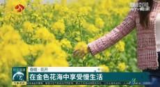 春暖·花开 在金色花海中享受慢生活