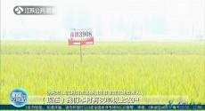 打好种业振兴战 夯实粮食稳产增产基础 既要产量也要品质 江苏超级稻品种再添3席