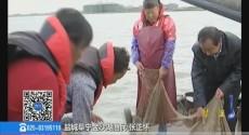 金秋话丰年:鱼肥桑熟白果甜